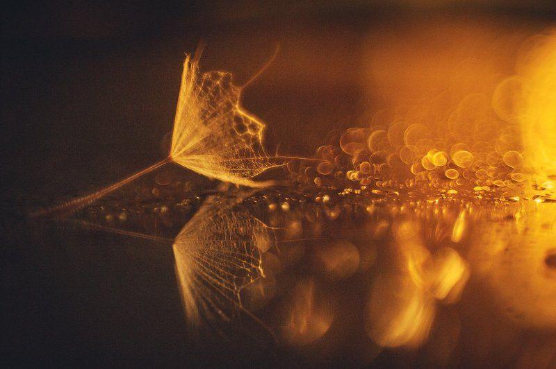 ...отражение в россыпи света, отголоски звенящий души...photo preview