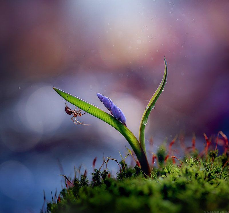 украина, коростышев, весна, лес, красота, макро, макро мир, природа, макро-красота, пролески, Антихрупкостьphoto preview