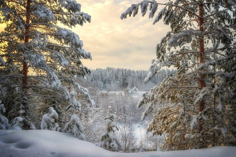 снег, лес, зима, закат, сугробы, небо, облака, деревья Завороженно любуюсь...photo preview