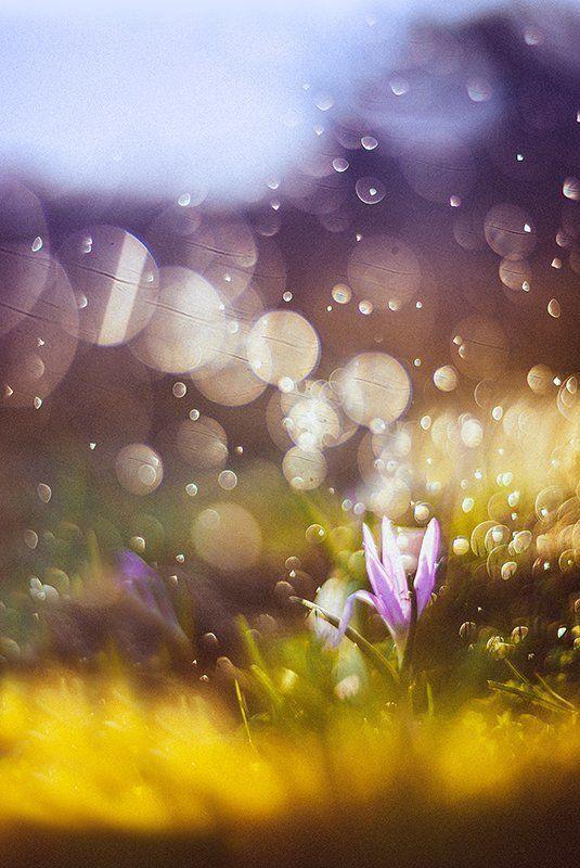 ...феерия весны...photo preview