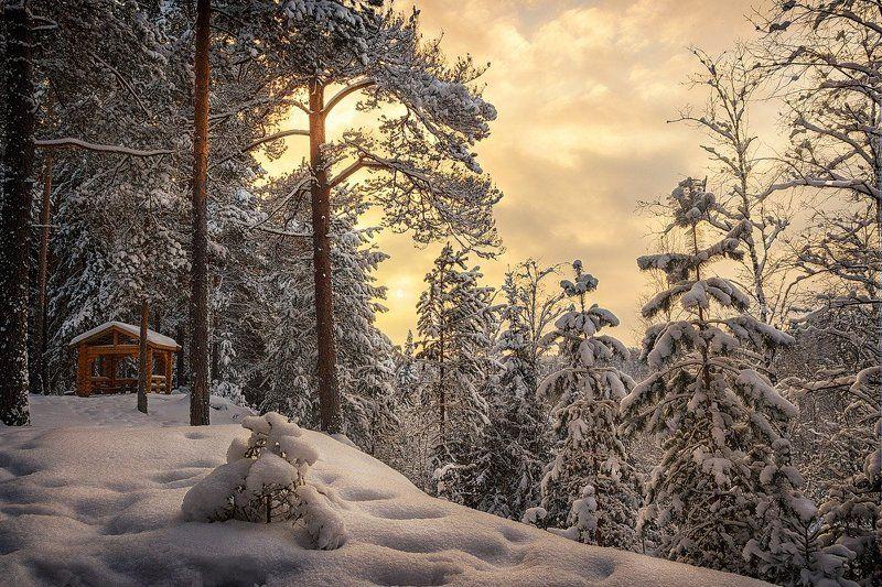 снег, лес, зима, закат, сугробы, небо, облака, деревья Я не хочу прощаться с этой красотой...photo preview