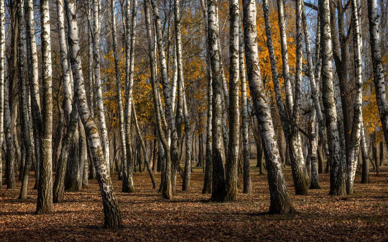 осень, в, городском, парке Немного об осени увядающейphoto preview