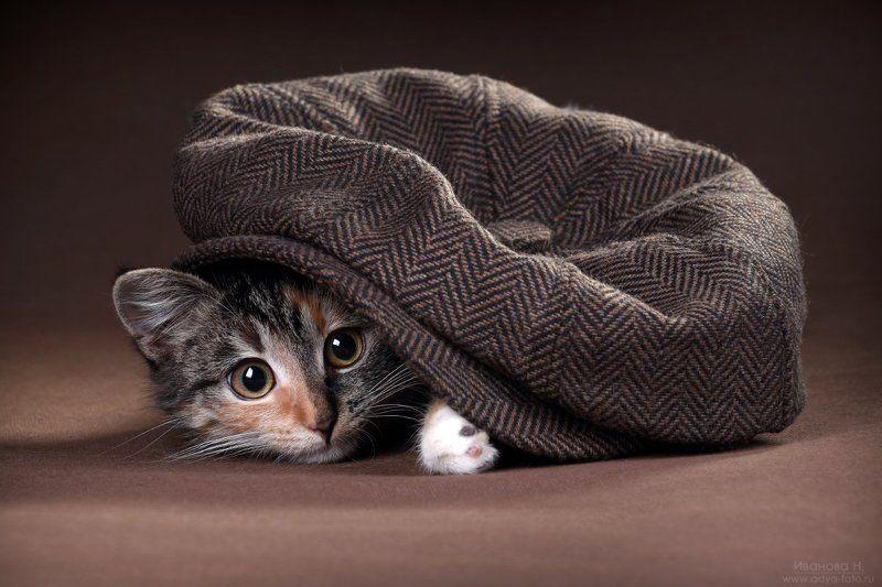 котенок Котенокphoto preview