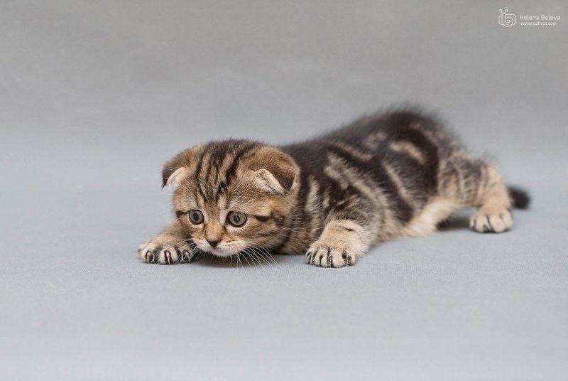 котёнок Маленький котёнокphoto preview
