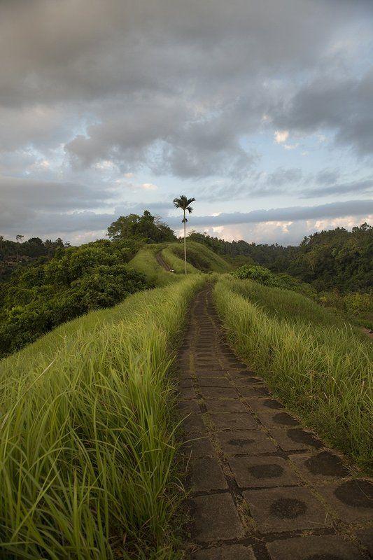 бали, тропа, рисовые террасы, пальма, закат,  Тропа Художниковphoto preview