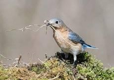 Весенние хлопоты у птиц - С Международным Днем Птиц!