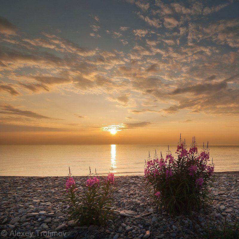 байкал, рассвет, иван-чай Утренний иван-чайphoto preview