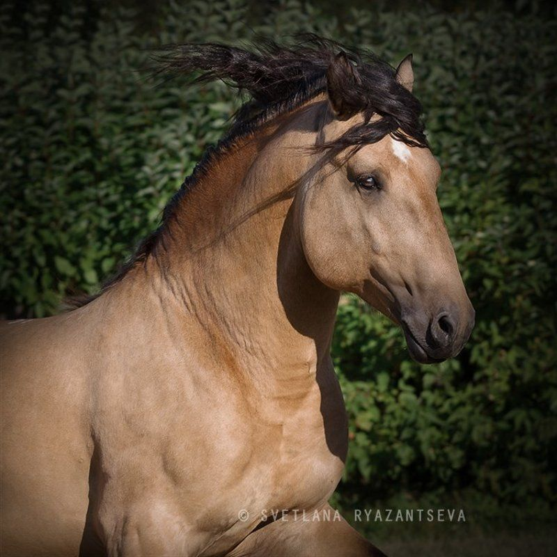 horse, motion, gallop, лошадь, лошади, в движении expressionphoto preview