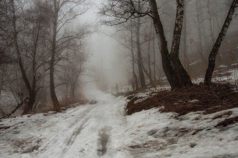 Туманные тропы весны.photo preview