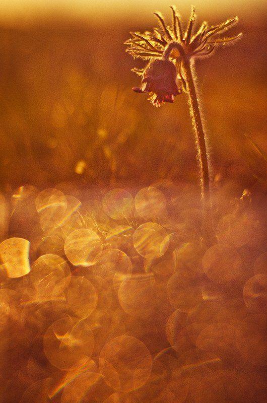 ...в закатном золоте купаясь...photo preview