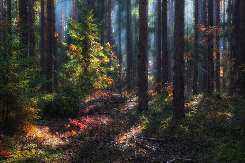 осень, лес, дымка, Краски осеннего летаphoto preview