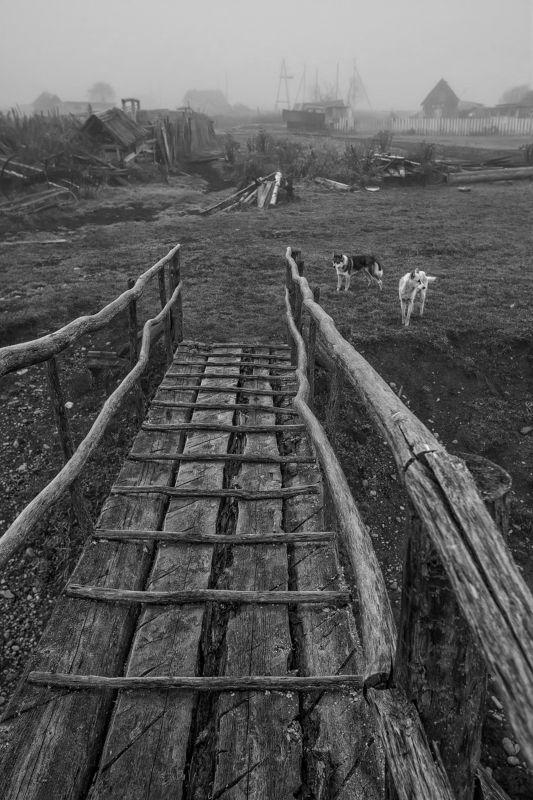 лето алтай деревня собаки отпуск Незванные гостиphoto preview