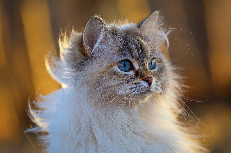 кот, кошка, животные, Весенняя прогулкаphoto preview
