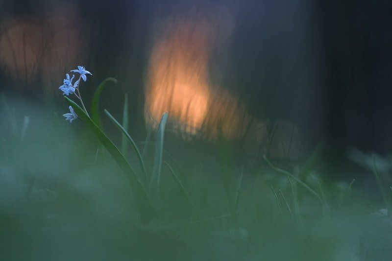 spring, flower, light Behind the sunsetphoto preview