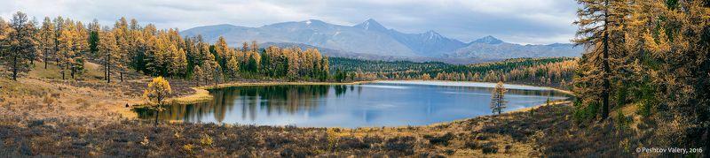 лиственницы, осень, отражения, горный алтай, озеро киделю Размышления про Киделю…photo preview
