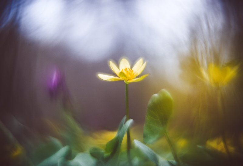 Весна придет отпраздновать любовь.........photo preview