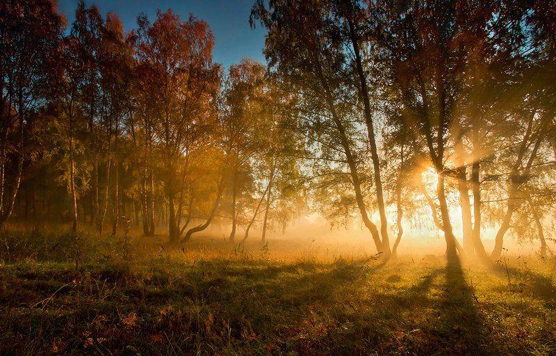 осень, утро, рассвет, туман, свет, деревья, трава, лучи, солнце Осенним утромphoto preview