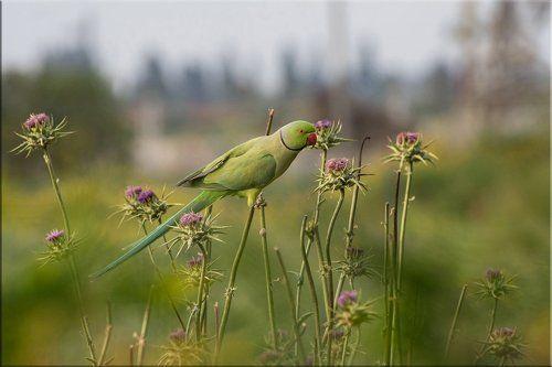 Пасмурное утро и зелёный попугай