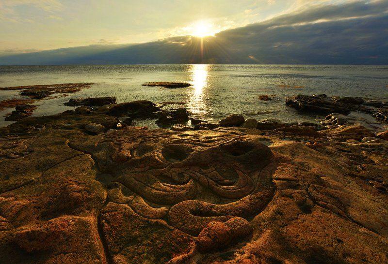 Змеи и гады морскиеphoto preview