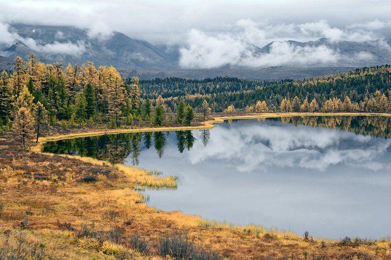 лиственницы, осень, облака, отражения, горный алтай, озеро киделю Киделю, в ожидании света…photo preview