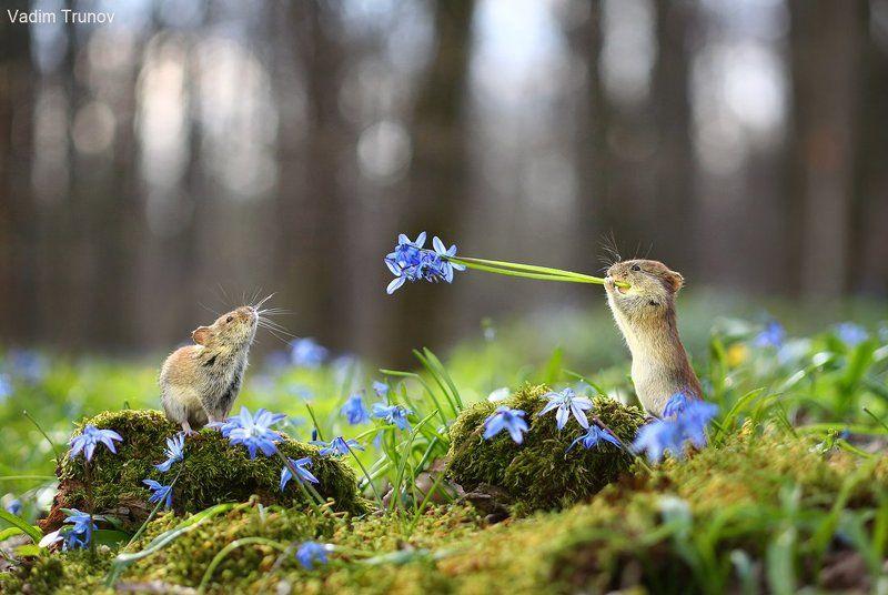Сумасшедшая веснаphoto preview