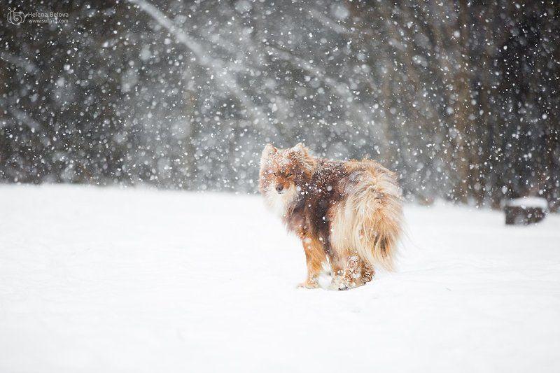 животные, пёс Метельphoto preview
