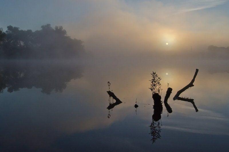 утро рассвет природа пейзаж коряги Спят коряги тёмныеphoto preview