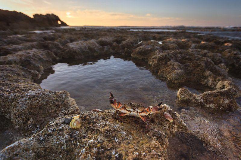 краб, море, пейзаж, ракушки, закат, средиземное море, клешни, животные, природа, камни, облака, Держи крабаphoto preview