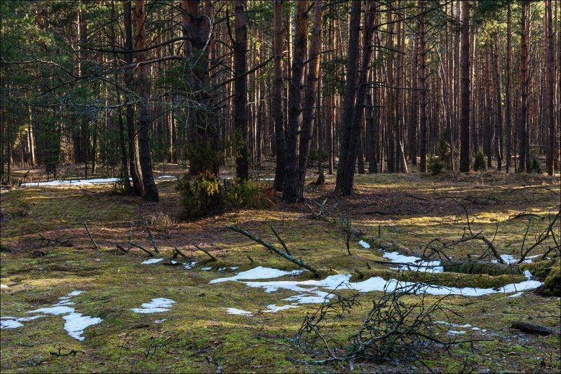 Март в лесах Тульской областиphoto preview