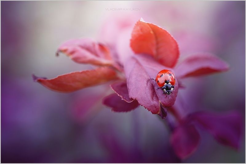 весна, апрель, насекомые, букашки, макро Я вижу тебя. Апрель СКФО. 2017photo preview