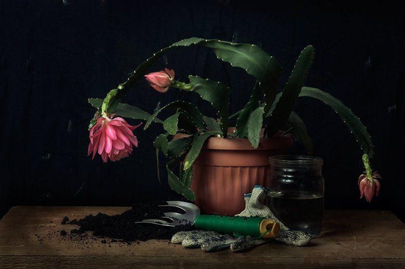 цветок, цветочный горшок, растение Садовникphoto preview