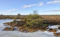 на болотах предчувствие весны 4