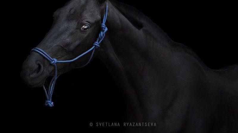 horse, black horse, black, dark, look, horses, horse head, portrait, портрет, лошадь, лошади out of darknessphoto preview