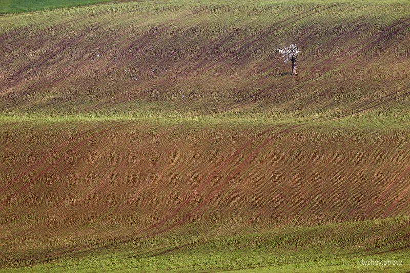 пейзаж, чехия, моравия, природа, дерево, поле, весна птицыphoto preview