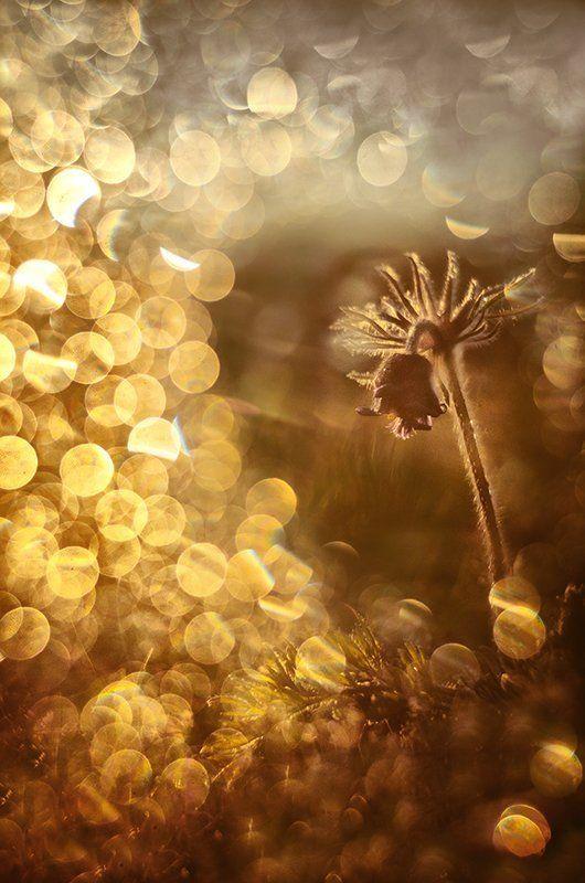 Солнечные зайчики любви, лучики тепла и вдохновенья...photo preview