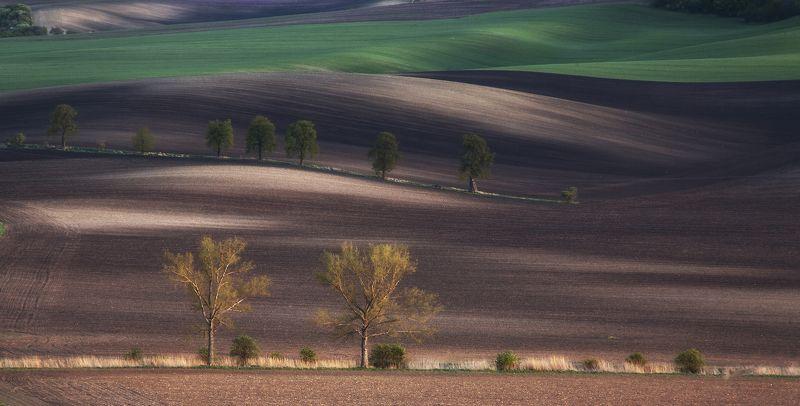 поле весна чехия Моравская классикаphoto preview