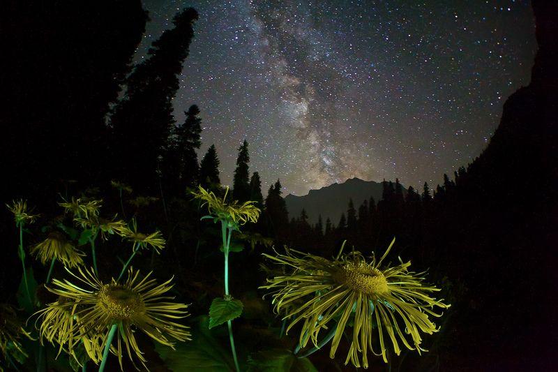 ночь, млечный путь, цветок, горы, лес,  Среди пространств и мировphoto preview