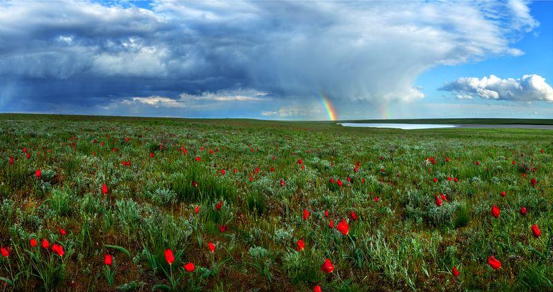 Маныч, Ростовский заповедник, тюльпаны, степь, весна \