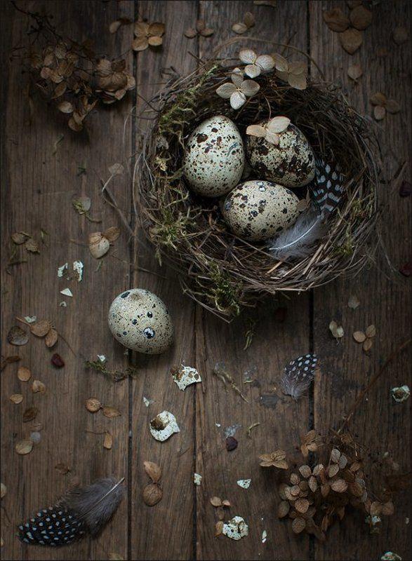 натюрморт, бардак, гнездо, яйца Перепелино-гнездовой :)photo preview