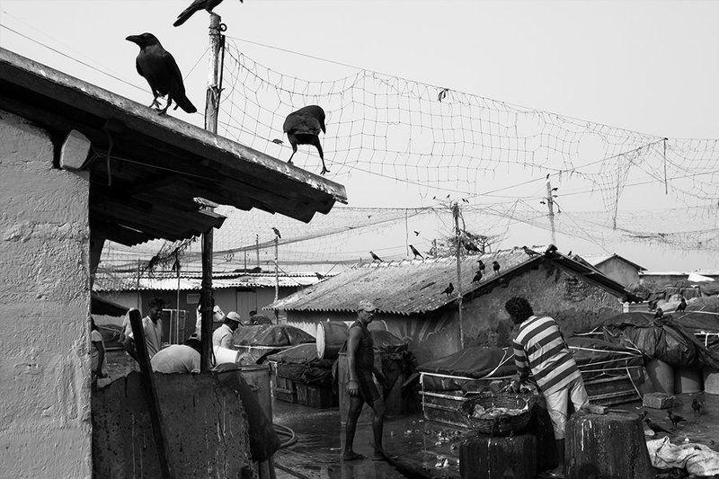 жанр, улица, репортаж, рыбный рынок, шри-ланка, арт, чб, bw, street, genre, fish market, sri-lanka Near the fish marketphoto preview