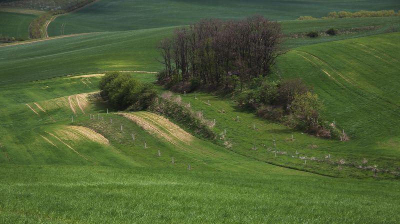 луг деревья весна Моравскаяphoto preview