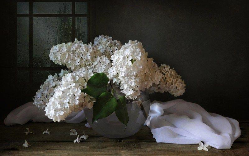 весна май сирень цветы Белая сирень и майский дождьphoto preview