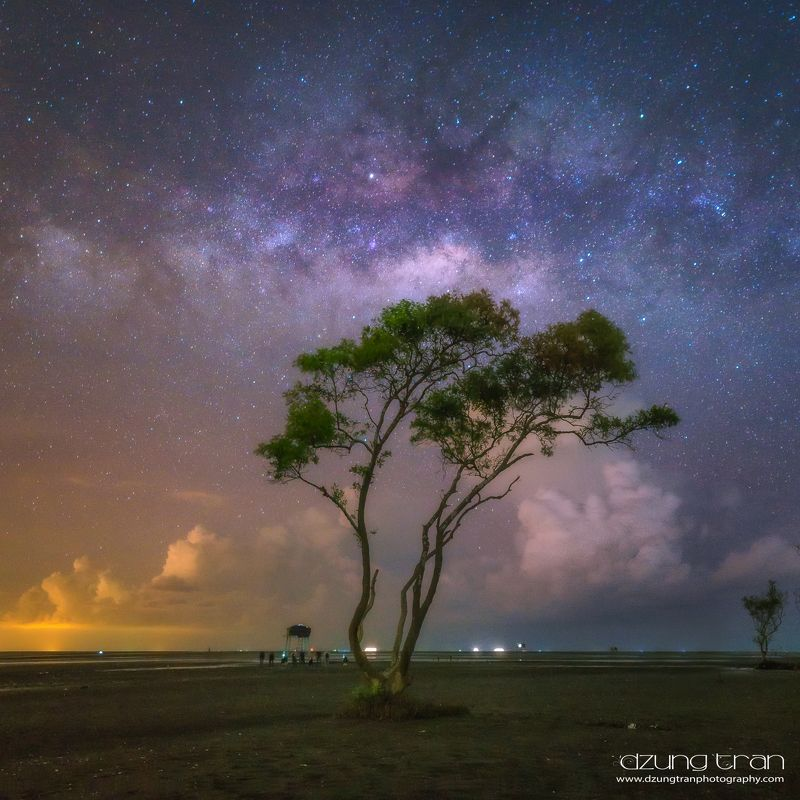 lonely,tree,milkyway,go cong,viet nam Milkyway over lonely treephoto preview
