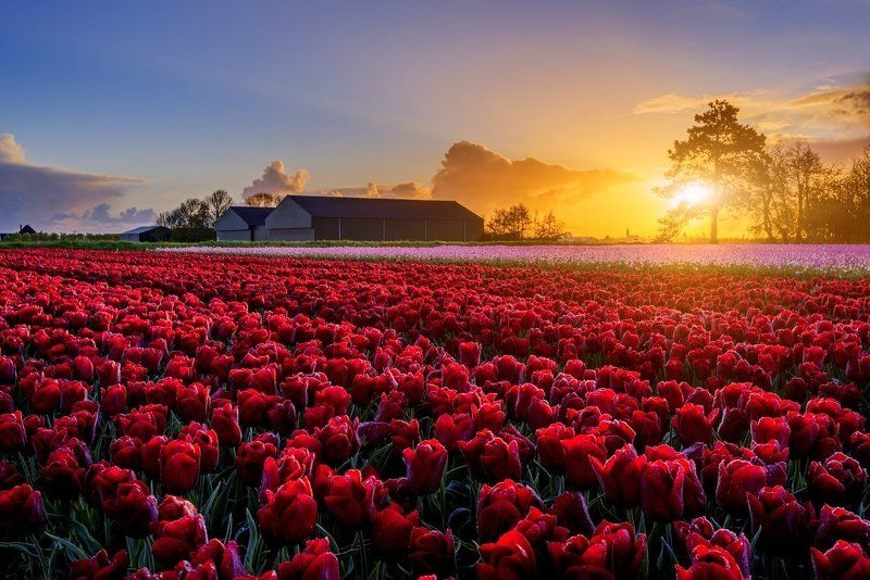 Spring, Netherlands, Alkmaar, North Holand, beautiful, europe, travel Spring Dutch Countrysidephoto preview