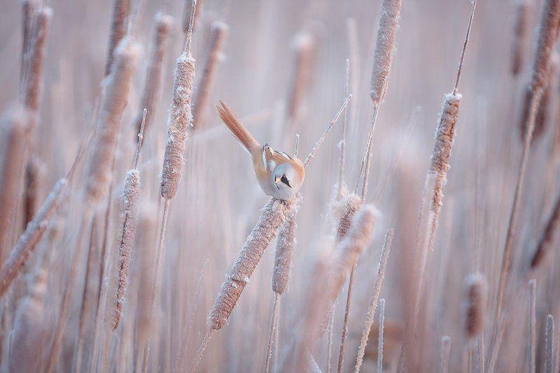 Зимним утром.photo preview