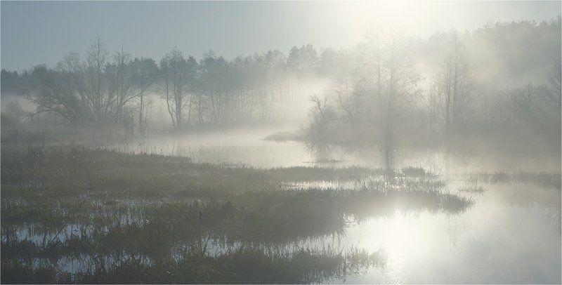 В туманеphoto preview