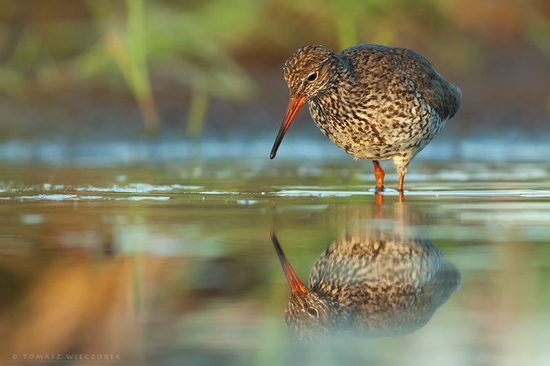 mirror, sunrise, lake, pond, polish, poland, wildlife, hide, reflection, light, bird, may, spring Mirror, mirror ...photo preview