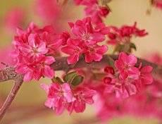 Нашу юность возвращает Яблоневый цвет! Александр Тарадов