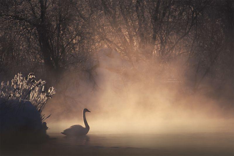 Рассвет на Лебедином озереphoto preview