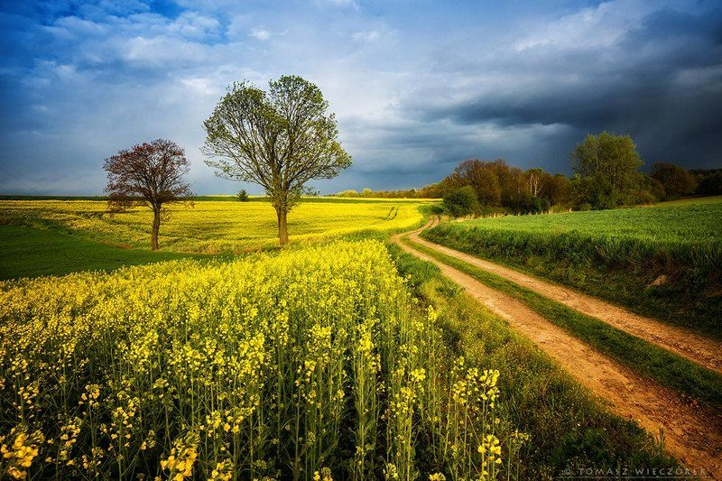 storm, fields, yellow, green, polish, poland, colours, sprong, trees, colza, clouds, sunset, sunrise Before the stormphoto preview